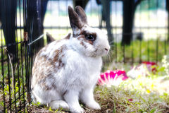 Rabbit in the cage. Bunny. Royalty Free Stock Photos