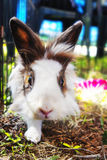 Rabbit in the cage. Bunny. Stock Photos