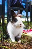 Rabbit in the cage. Bunny. Stock Image