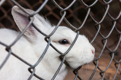 Rabbit in a Cage Royalty Free Stock Photo
