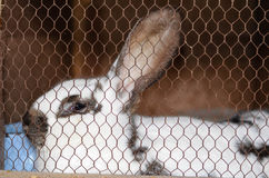 Rabbit in a cage Royalty Free Stock Photos
