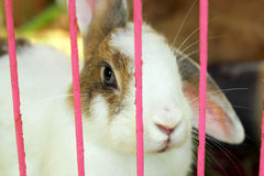 Rabbit in a cage. Stock Image
