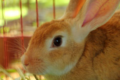Rabbit in a cage. Stock Images