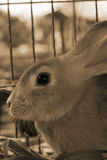 Rabbit in a cage. Royalty Free Stock Photo