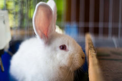 Rabbit in cage Royalty Free Stock Photos