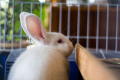 Rabbit in cage Royalty Free Stock Photo