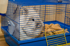 Rabbit in cage Royalty Free Stock Images