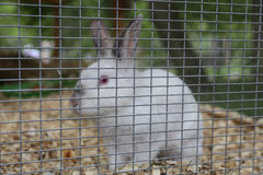 Rabbit in a cage Royalty Free Stock Images