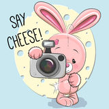 Rabbit with a camera Stock Photos
