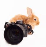 Rabbit and camera Stock Image