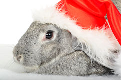 Rabbit in cap of Santy. On white royalty free stock image