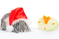Rabbit in cap of Santy with cabbage. Rabbit in cap of Santy with clock of cabbage over white royalty free stock image