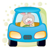Rabbit in a car Stock Photo