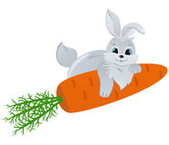 Rabbit with Carrot. Cute Rabbit with big Carrot Stock Photography