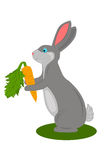 Rabbit with carrot Royalty Free Stock Photos