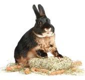 Rabbit with a carrot Stock Photos
