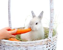 Rabbit with carrot Stock Photos