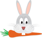 Rabbit with carrot in his mouth Royalty Free Stock Photography