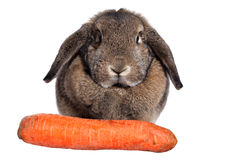 Rabbit with carrot isolated on a white Stock Image