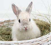 Rabbit with carrot Stock Photo