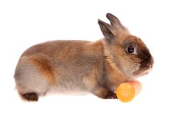 Rabbit with a carrots. Stock Photo