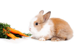 Rabbit and carrots Royalty Free Stock Photos