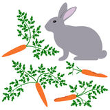 Rabbit and carrots Stock Photos