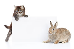 Rabbit and cat. Cat and rabbit with blank white cardboard Royalty Free Stock Photography