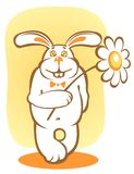 Rabbit and chamomile Royalty Free Stock Photo