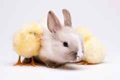 Rabbit&chick, springtime colorful bright theme Stock Photography