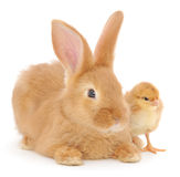 Rabbit and chicken Royalty Free Stock Photos