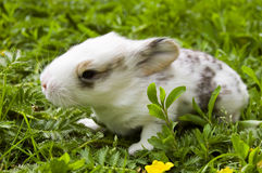 Rabbit child Royalty Free Stock Image