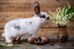 Rabbit with chocolate eggs and flowers. On wooden background Stock Photography