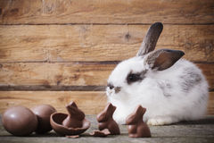 Rabbit with chocolate eggs Royalty Free Stock Image