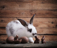 Rabbit with chocolate eggs royalty free stock images