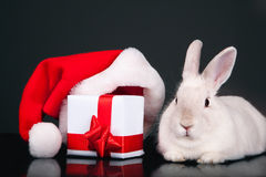 Rabbit with Christmas box Royalty Free Stock Image