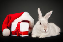 Rabbit with Christmas box Stock Photo