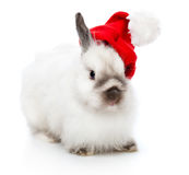 A rabbit in a christmas cap Stock Photography