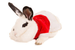 Rabbit with christmas costume Royalty Free Stock Photo