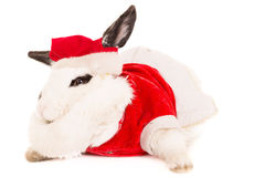 Rabbit with christmas costume Royalty Free Stock Image