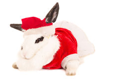 Rabbit with christmas costume Royalty Free Stock Photography