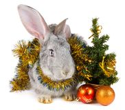 Rabbit and christmas decorations Royalty Free Stock Photo