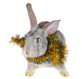 Rabbit and christmas decorations Stock Photography