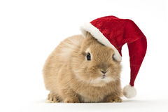 Rabbit with a christmas hat Stock Photography
