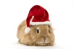 Rabbit with a christmas hat Stock Photos