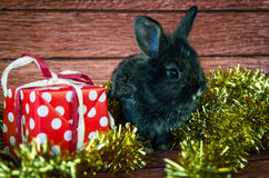 Rabbit and christmas present Stock Images