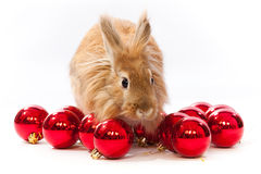 Rabbit in a Christmas tree balls Stock Photo