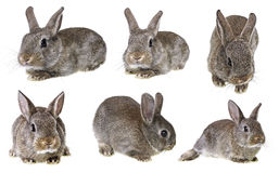 Rabbit - collection Royalty Free Stock Photo