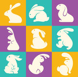 Rabbit collection Royalty Free Stock Photo
