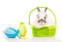Rabbit  with colored eggs Stock Photo